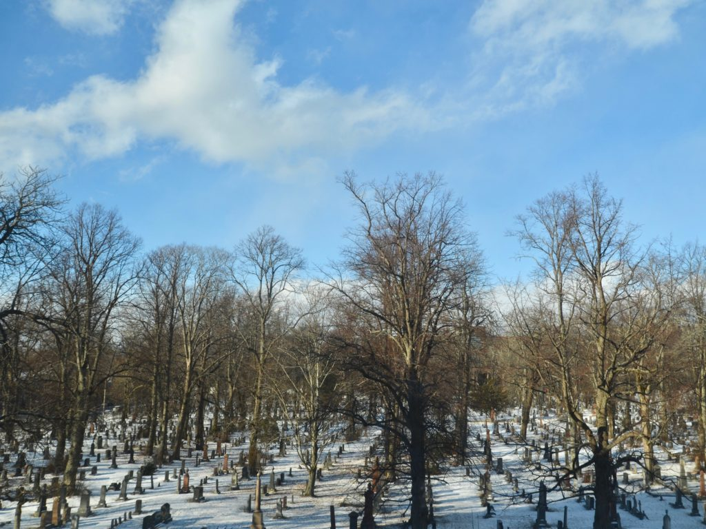 Sweeping views of the tree filled cemetery next door