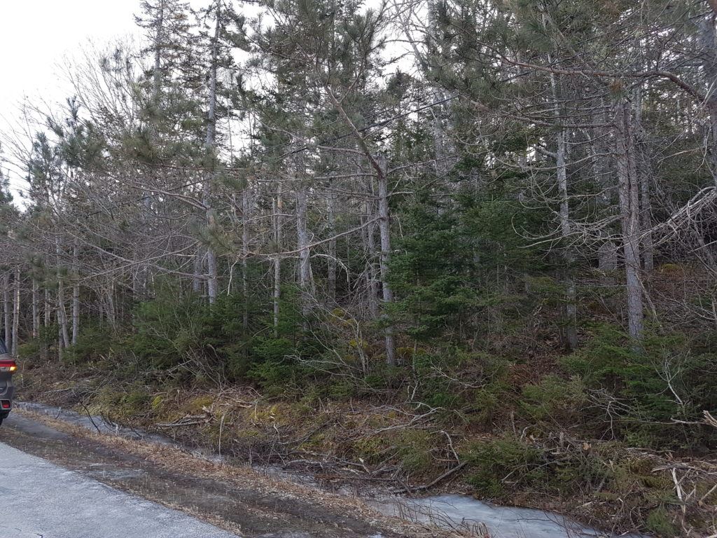 Gorgeous treed lot that is gently sloping. Views of Mahone Bay.