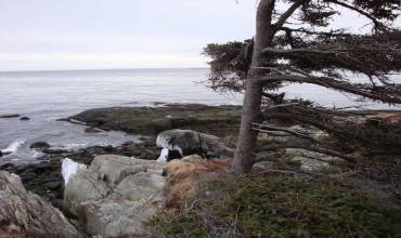 Back Cove, Beaver Harbour, NS, ,Vacant Land,For Sale,Back Cove,201919660